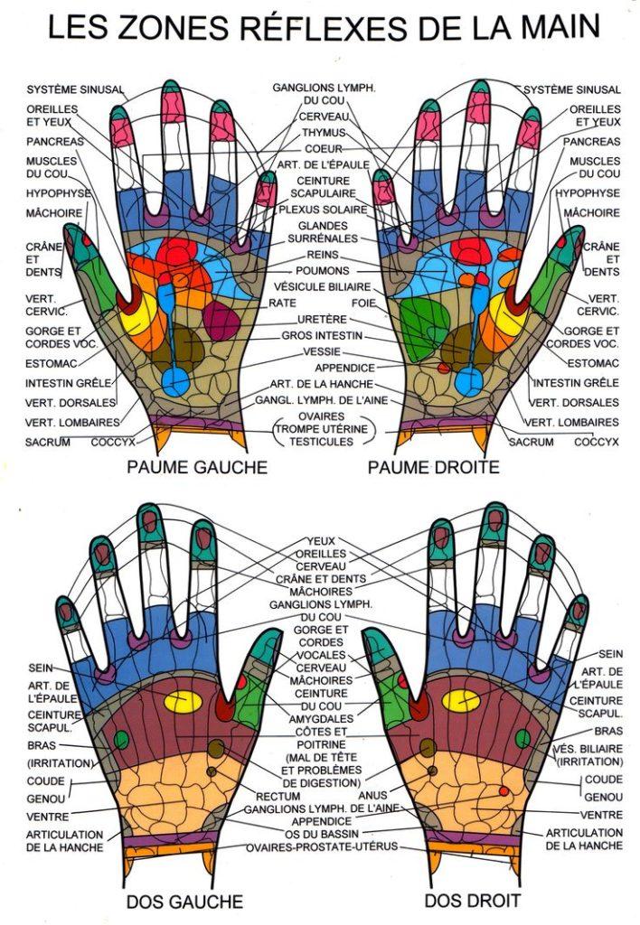 la réflexologie palmaire avec les différentes zones à travailler